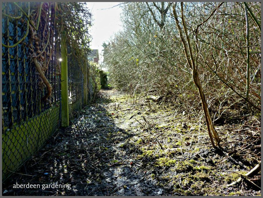 woodland 018