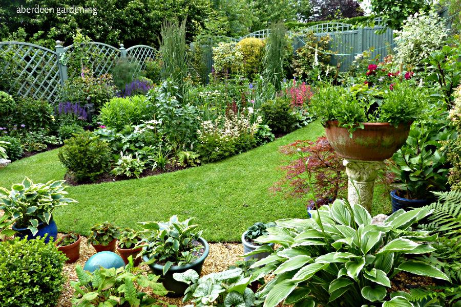 back garden June 19th
