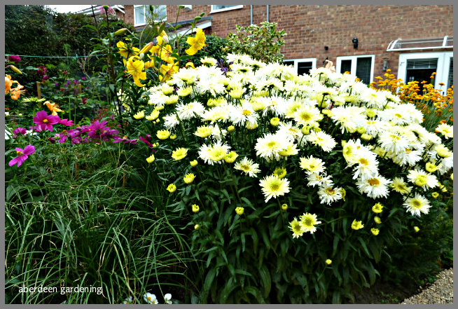 Back garden July24th (12)