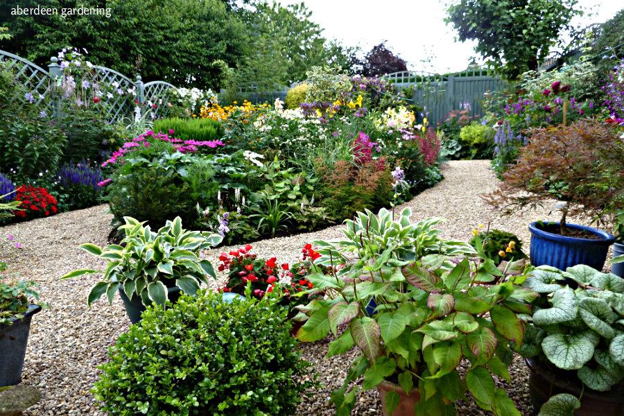 Back garden July24th