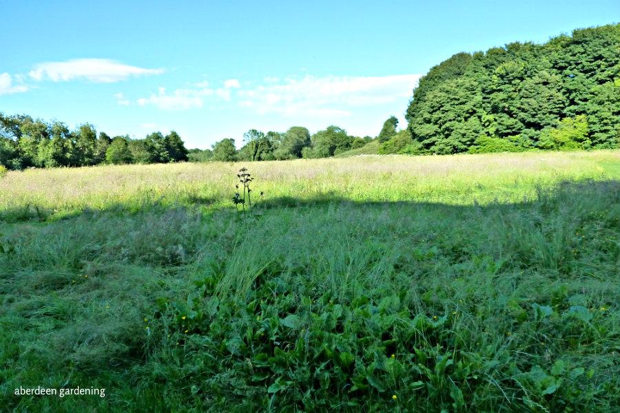 The Dane Meadow (4)