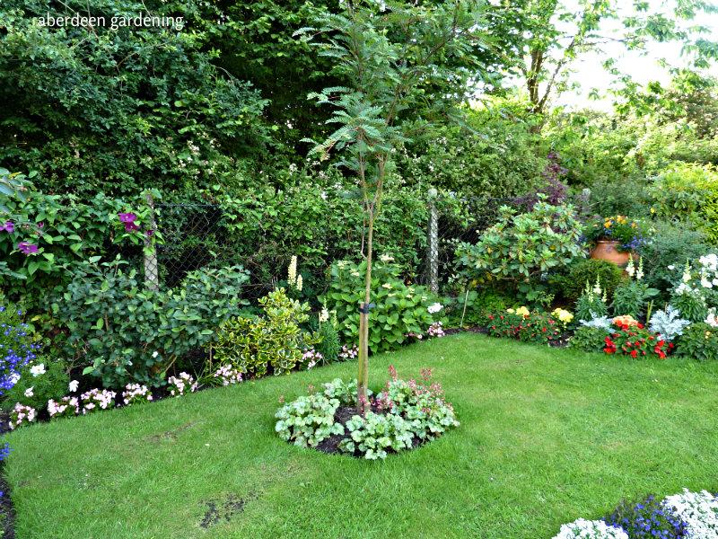 Front garden late June (6)
