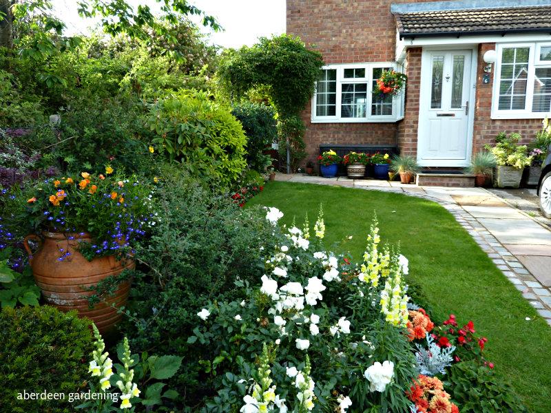 Front garden late June (7)