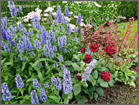 Hillarys garden July 15th (13) - Copy