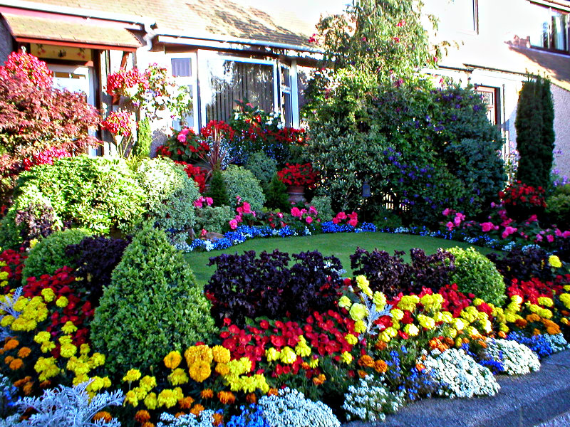 Our Aberdeen front garden in full bloom