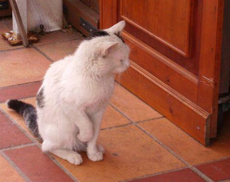 stray cat in Istanbul