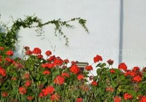 4 Bedrooms, Villa, Vacation Rental, 3 Bathrooms, Listing ID 1041, Paros, Greece,
