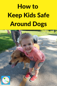 Having dogs in the home can be fantastic, but accidents can happen. Keep kids safe around dogs by taking the necessary precautions. #dogs #kids #kidsafety