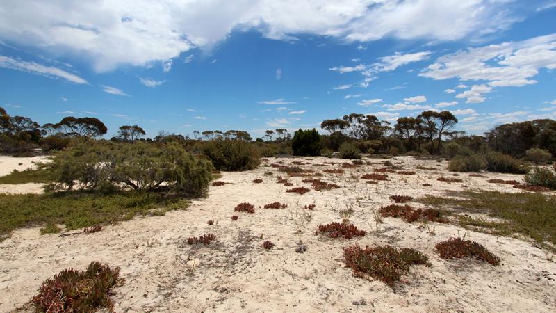 Ngarkat Conservation Reserve