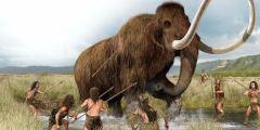البشر هم السبب في انقراض الماموث الصوفي