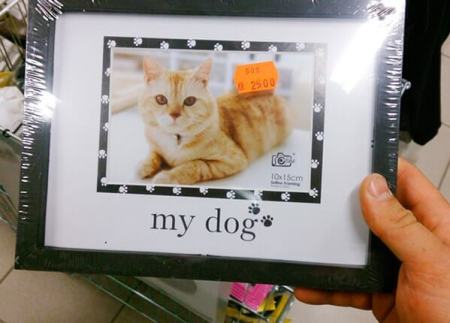 erro-design-embalagem-dog-or-cat-min