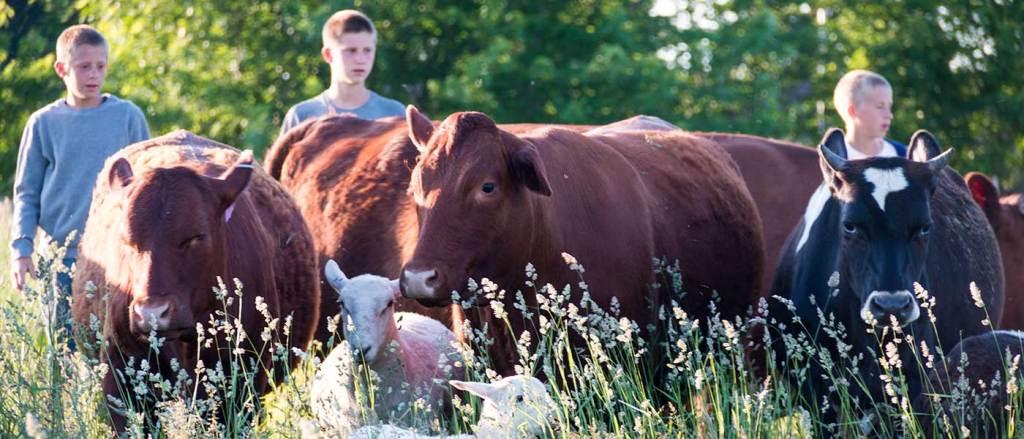 Abiding Acres Farm in Delavan Wisconsin