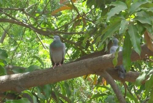 Birds sitting in a branch enjoying quiet time