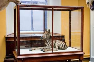 Dead Zoo zebra