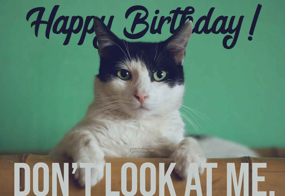 17 Never Seen Before Cat Birthday Memes