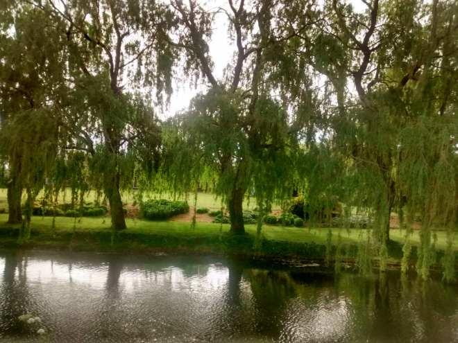 hangingtrees
