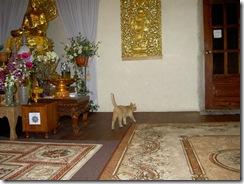 У Чатри в Храме 2 июня 2009 г. 017