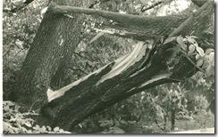 мальчишки дерево сломали.  1