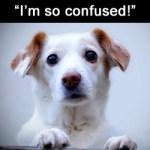 WordPress.org vs. WordPress.com: Are You Confused?