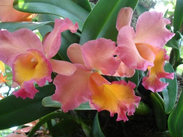 Orchids-March-2006-32-1024x768 New York Botanical Garden New York  New York Gardens