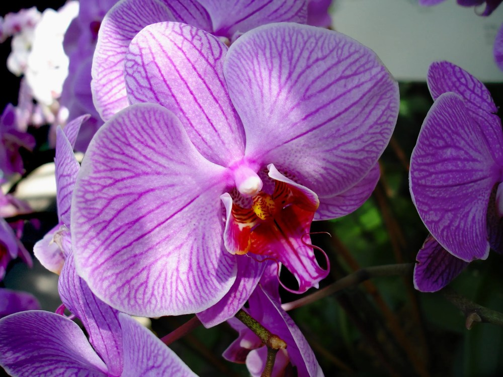 Orchids-March-2006-56-1024x768 New York Botanical Garden New York  New York Gardens