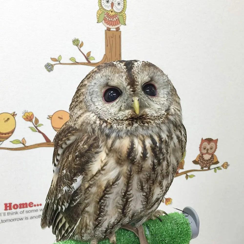 Owl Cafe 002 | Owl Cafe Tokyo