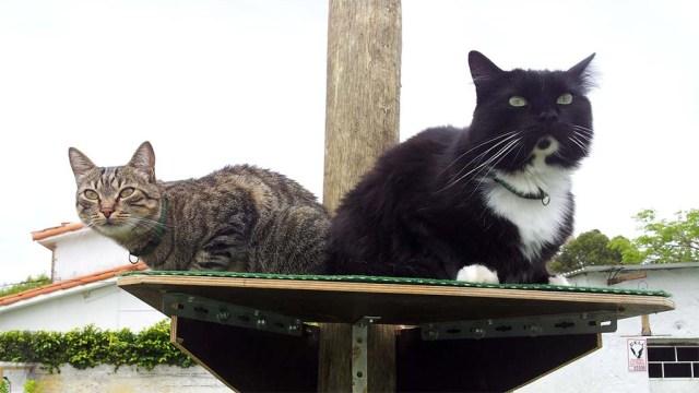 Minnie und Puschel