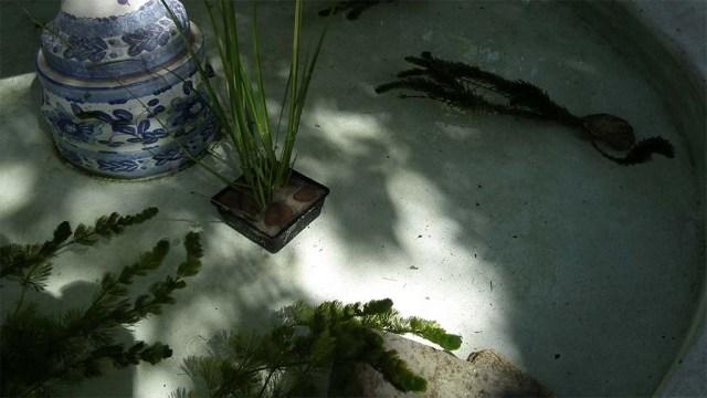 Miniteich mit Pflanzen...