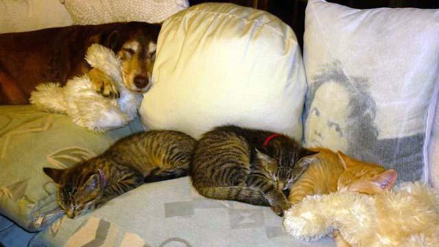 Auch die beiden Hunde, hier im Bild Floh, haben die Wichtel angenommen :-)