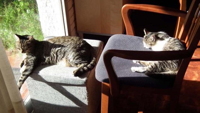 Minnie und Kalea beim Sonnenbad