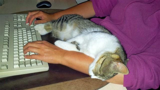 """""""Ein Hund sitzt neben dir, während du arbeitest.  Eine Katze sitzt auf deiner Arbeit."""" -  Pam Brown"""