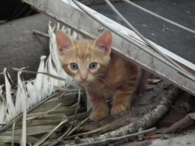 Katzen10.12.201213-12-25.jpg