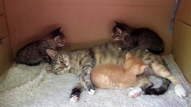 Elua mit Kitten