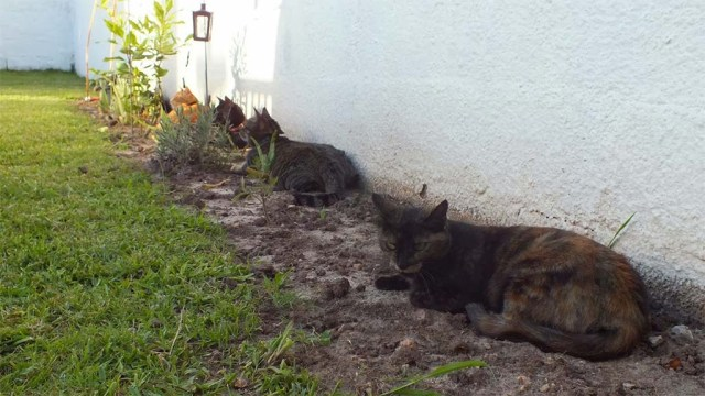 Katzenbeet