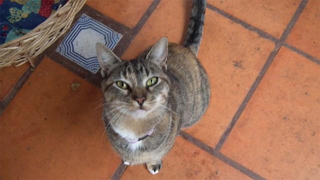 Elua, kurz nach ihrem ersten Auftauchen im November 2012