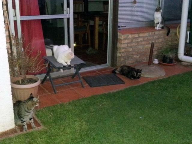 Abendliches Sit-in im Garten