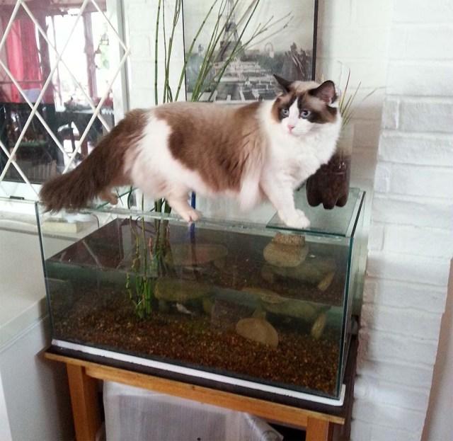 Alicia checked das neue Aquarium