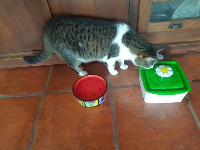 """Der kleine von """"Cat-it"""", aus Plastik und nicht unser Favorit, aber im Koffer einfacher zu transportieren ;-)"""