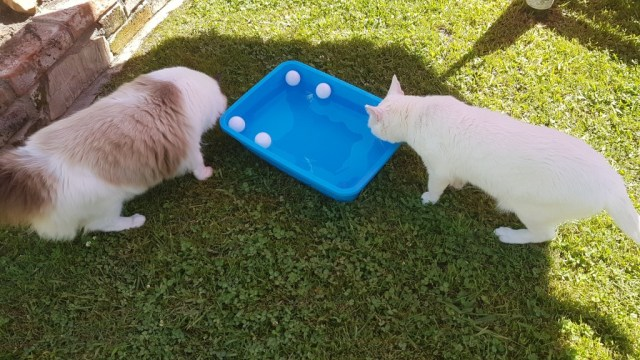 Alice und Columbo bei den Wasserspielen