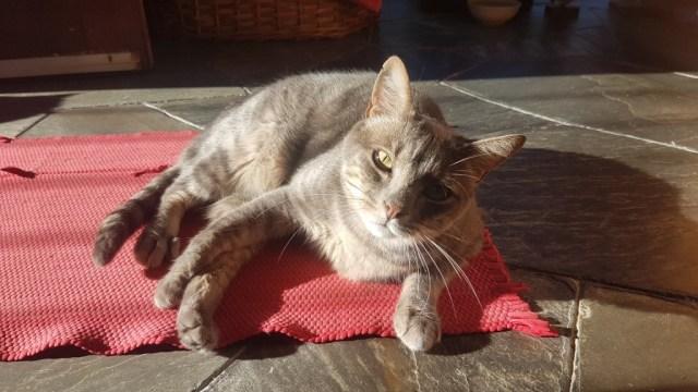 Kalani genießt ein Sonnenbad