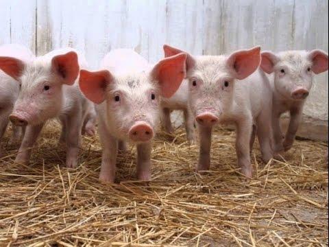 bienestar animal en las