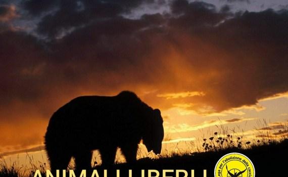 Lega per l'abolizione della caccia