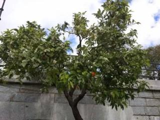 seville-flowers-