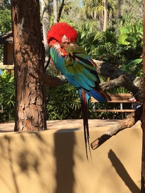 Colorful macaw at zoo