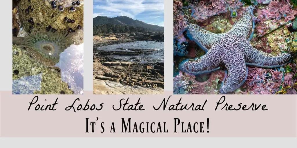 San Lobos on the Monterey Peninsula