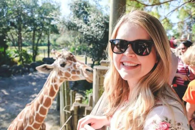a giraffe at the zoo in Cocoa Beach Florida