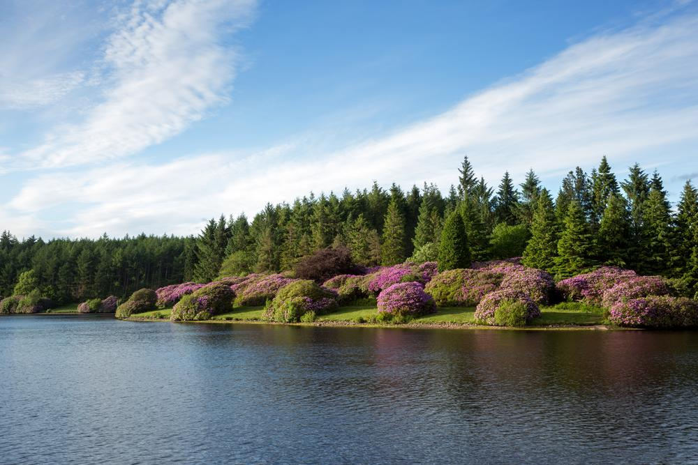 Dartmoor National Park on AboutBritaincom