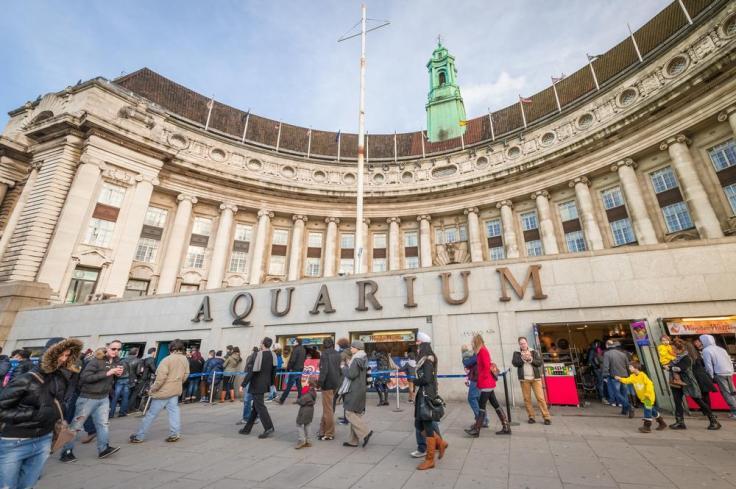 Image result for london sea life aquarium