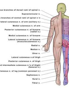 also spinal cord syndrome rh aboutcancer