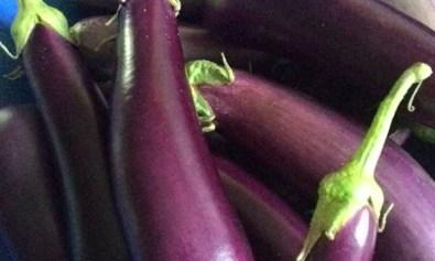 Talong (Eggplant)